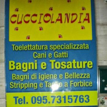 Negozio animali Catania