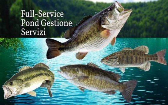acquacoltura norma sepond management
