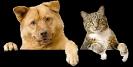 Negozio per animali Roma